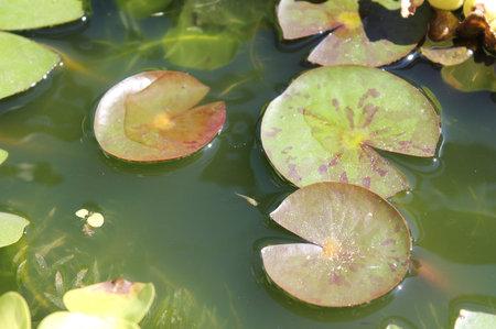 biotope0919-8.jpg