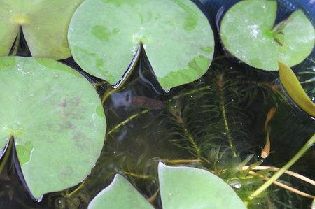 biotope120715-3.jpg