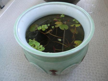 tsukurikata20121202-5.jpg