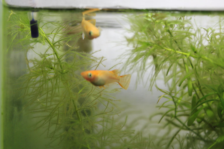 http://www.minibiotope.com/image/suisou0210-1.jpg